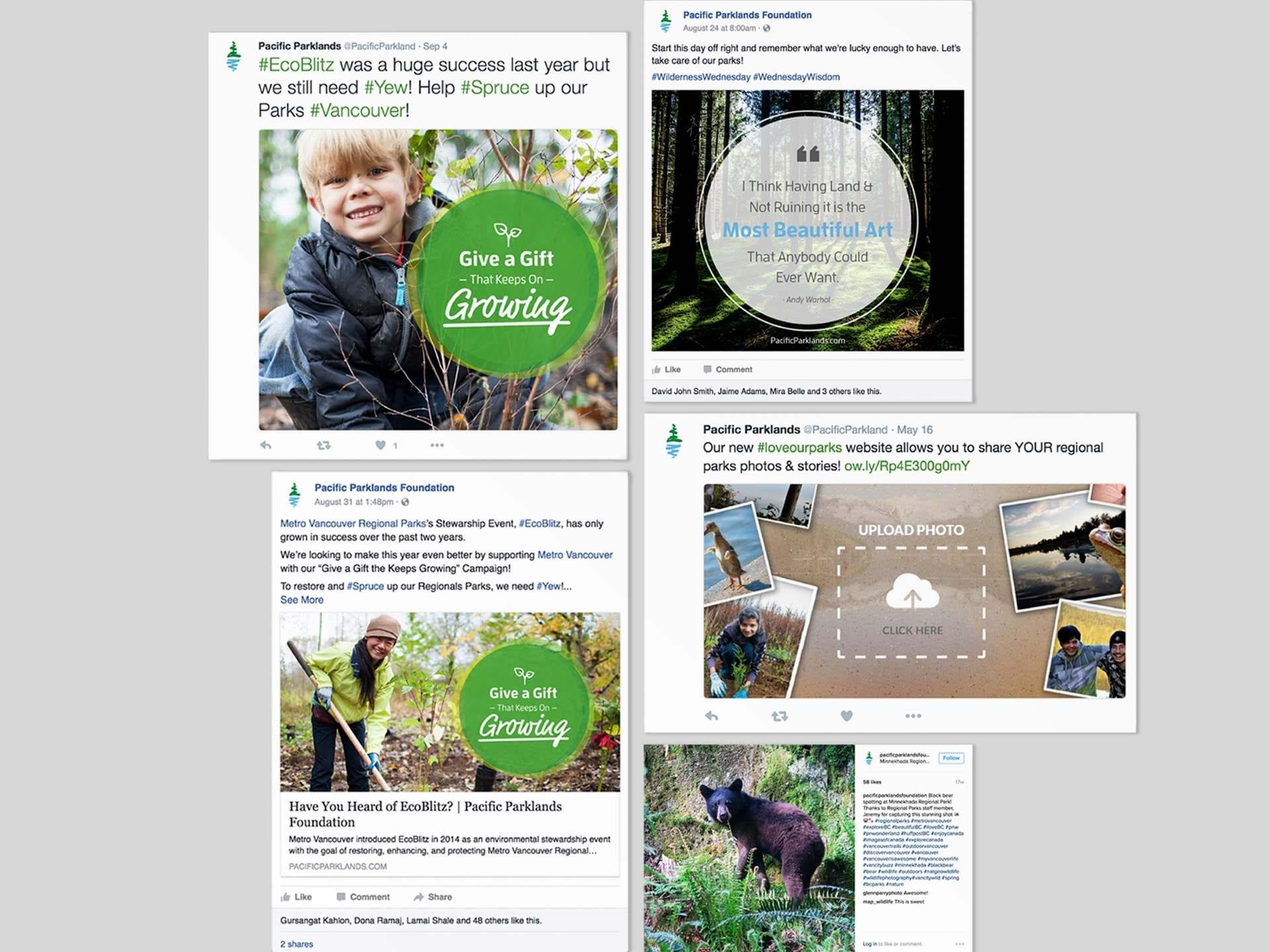 Y5 Creative Case Studies Pacific Parklands Social Media Campaign